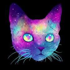 Картинки тумблер кот и котики (22)