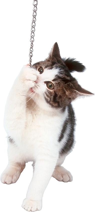 Котики картинки для фотошопа - подборка (1)