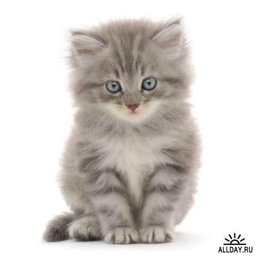 Котики картинки для фотошопа - подборка (13)
