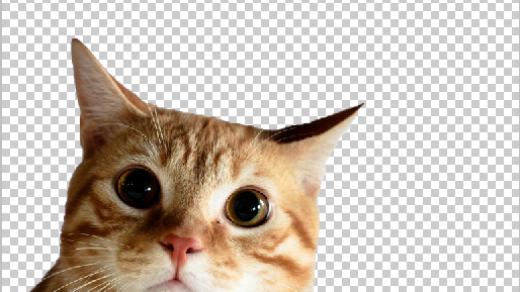 Котики картинки для фотошопа   подборка (3)