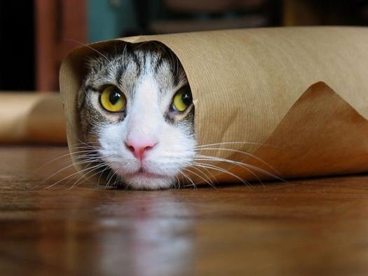 Котики картинки для фотошопа - подборка (5)