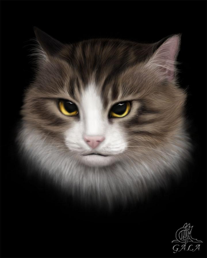 Котики картинки для фотошопа - подборка (6)