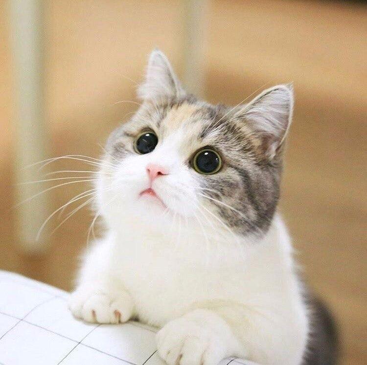 Котики картинки для фотошопа - подборка (7)
