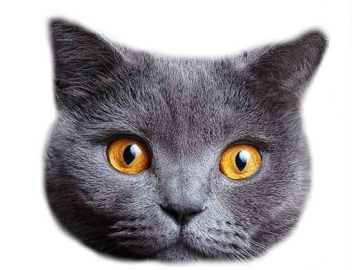 Котики картинки для фотошопа - подборка (9)