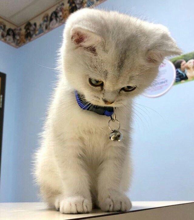 Котики прикольные картинки и фото - новые 2019 (24)