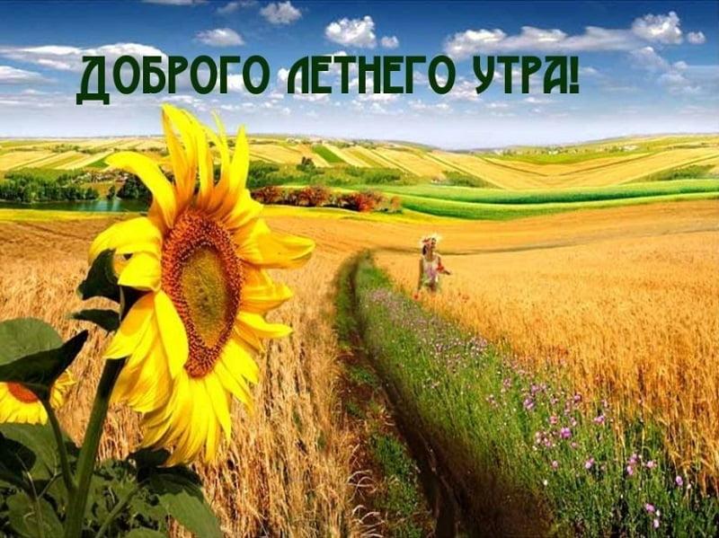 Красивые картинки доброго летнего утра - подборка (4)