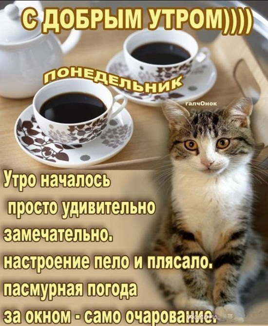прикольные картинки про доброе утро в понедельник этой странице вам