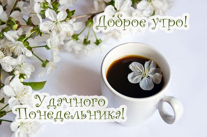 Красивые картинки доброе утро в понедельник - подборка (6)
