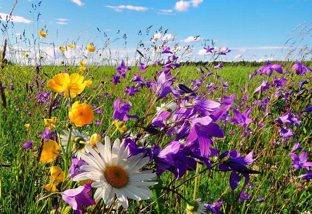 Красивые картинки и фото про июль - подборка 20 изображений (1)