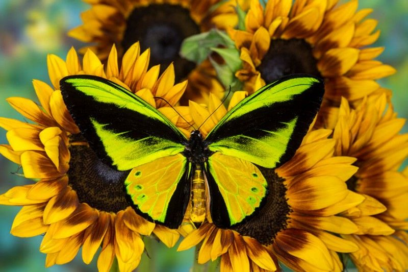 Красивые картинки и фото про июль - подборка 20 изображений (19)