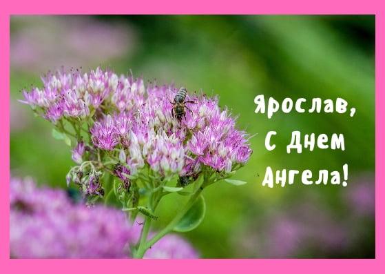 Красивые картинки на именины Ярославы с днём ангела (6)