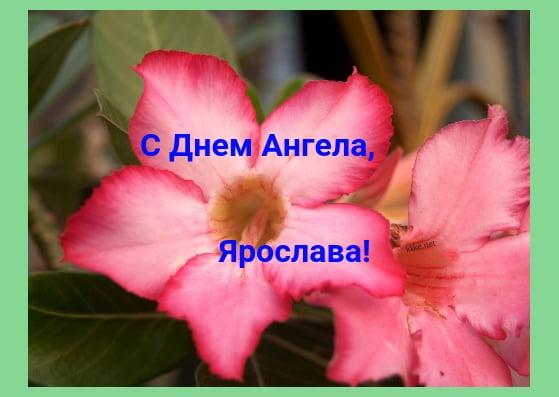 Красивые картинки на именины Ярославы с днём ангела (8)