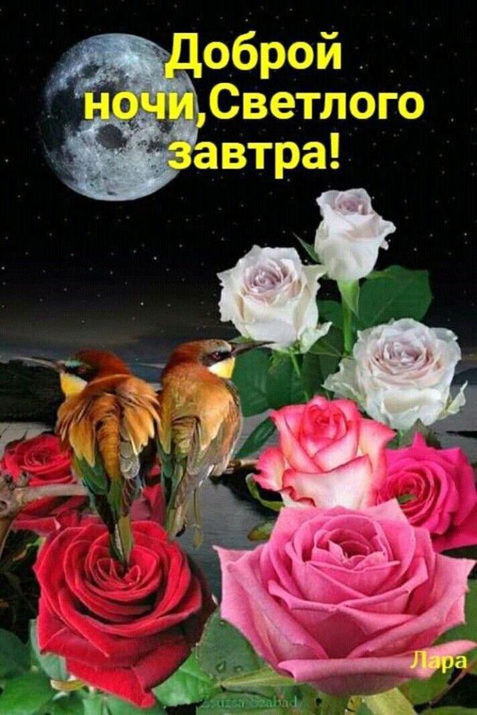 Красивые картинки спокойной ночи - открытки (12)