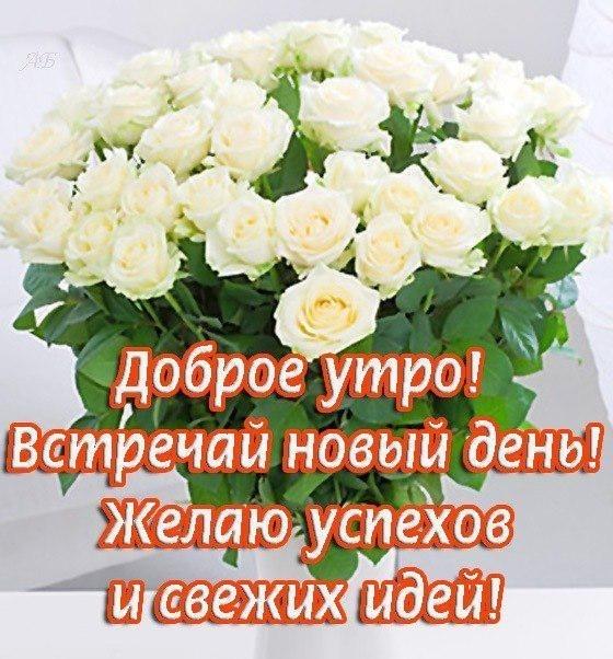 Красивые картинки с добрым утром девушке с розами (13)