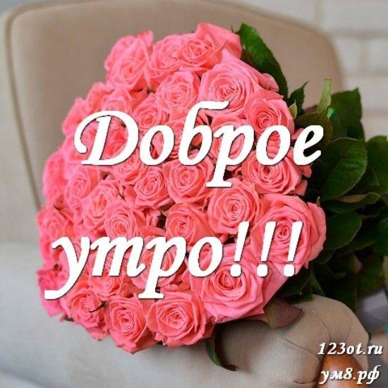 Красивые картинки с добрым утром девушке с розами (15)