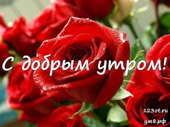 Красивые картинки с добрым утром девушке с розами (4)