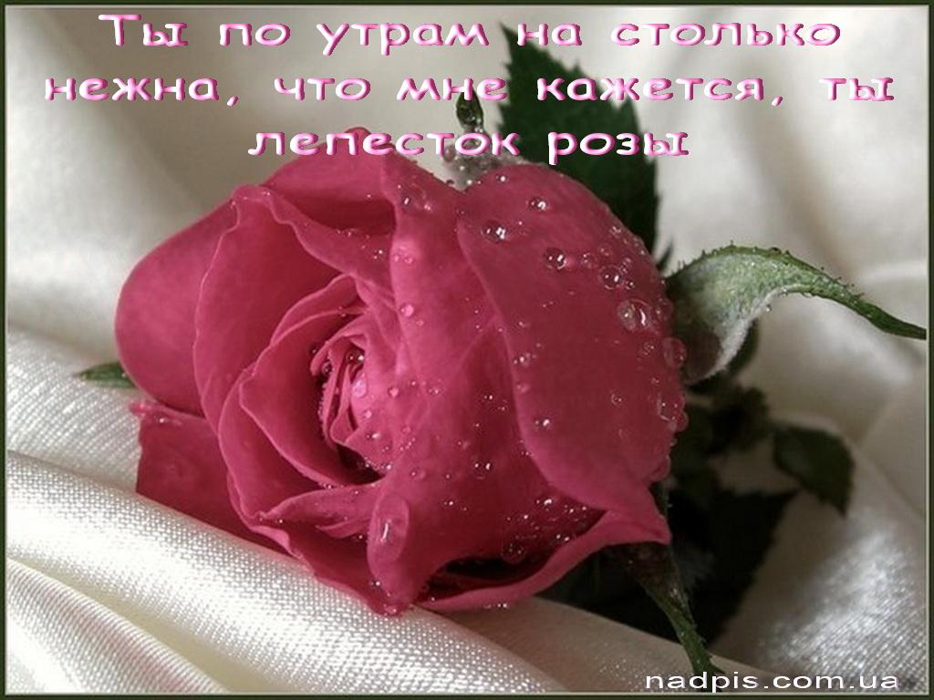 Красивые картинки с добрым утром девушке с розами (6)