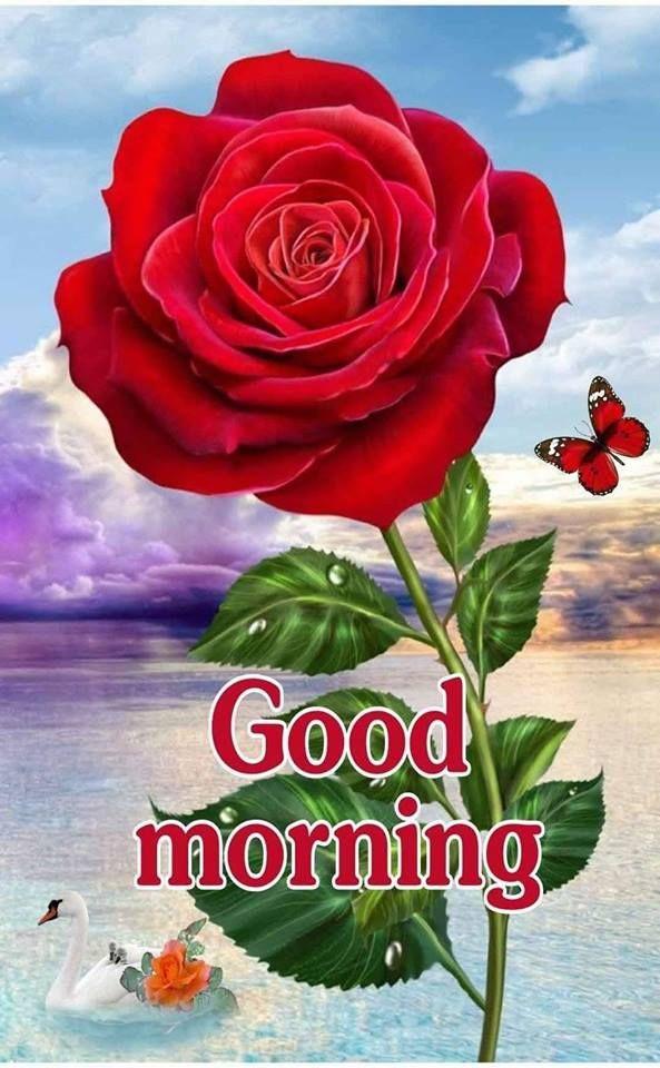 Красивые открытки с добрым утром мерцающие для женщин (17)
