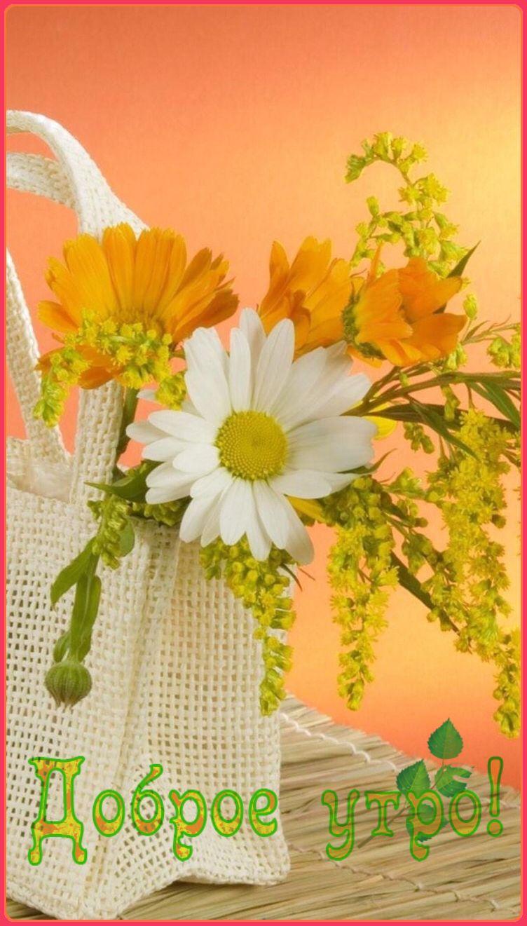 Красивые открытки с добрым утром мерцающие для женщин (18)