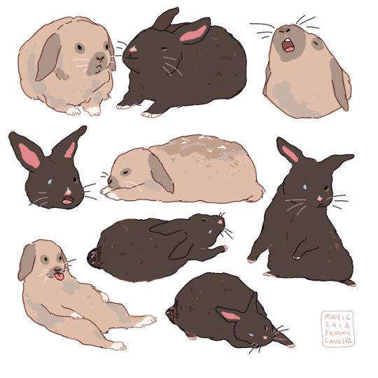 Кролик рисунок и картинки (1)