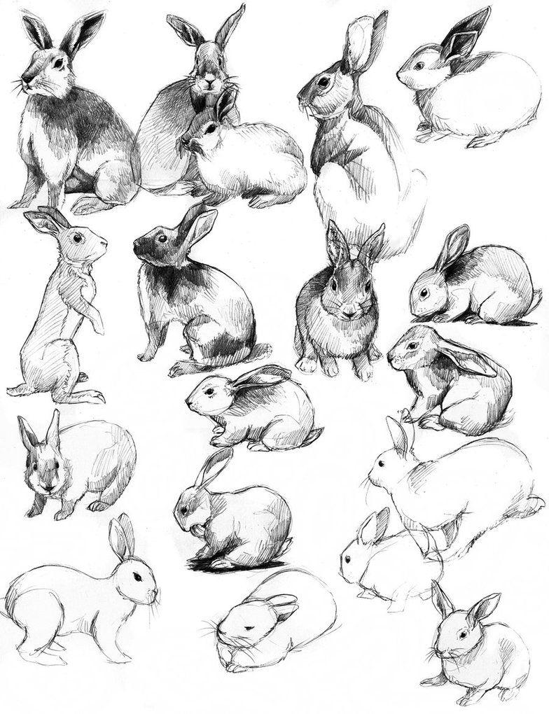 Кролик рисунок и картинки (11)