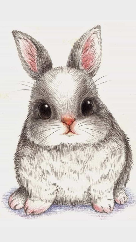 Кролик рисунок и картинки (16)