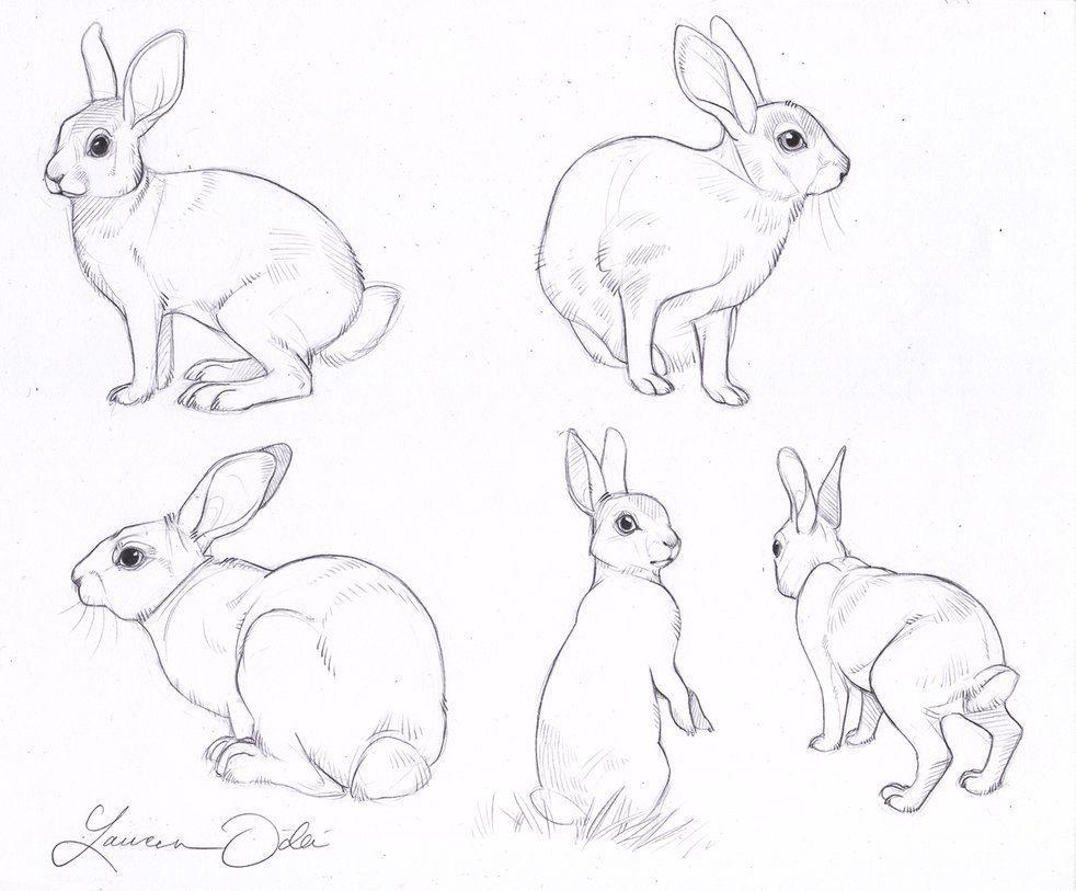 Кролик рисунок и картинки (17)