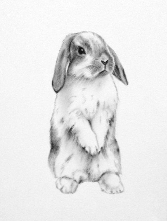 Кролик рисунок и картинки (2)