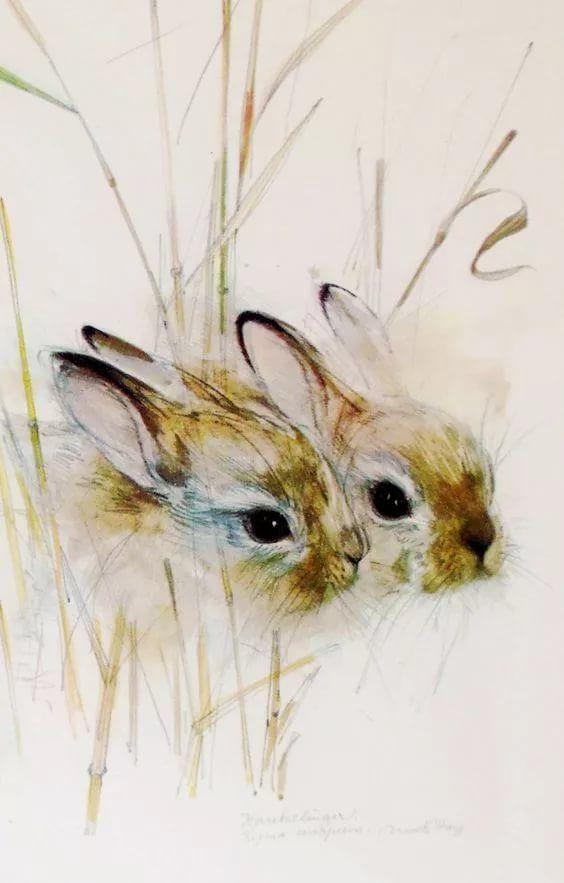 Кролик рисунок и картинки (23)