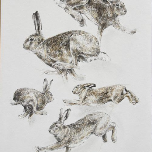 Кролик рисунок и картинки (24)