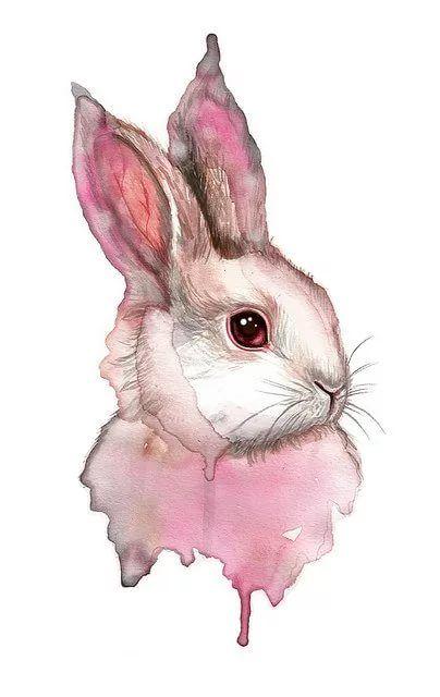 Кролик рисунок и картинки (4)