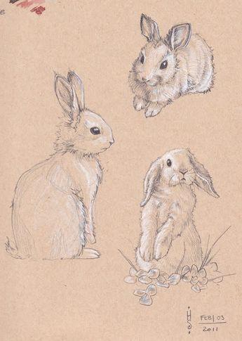 Кролик рисунок и картинки (6)