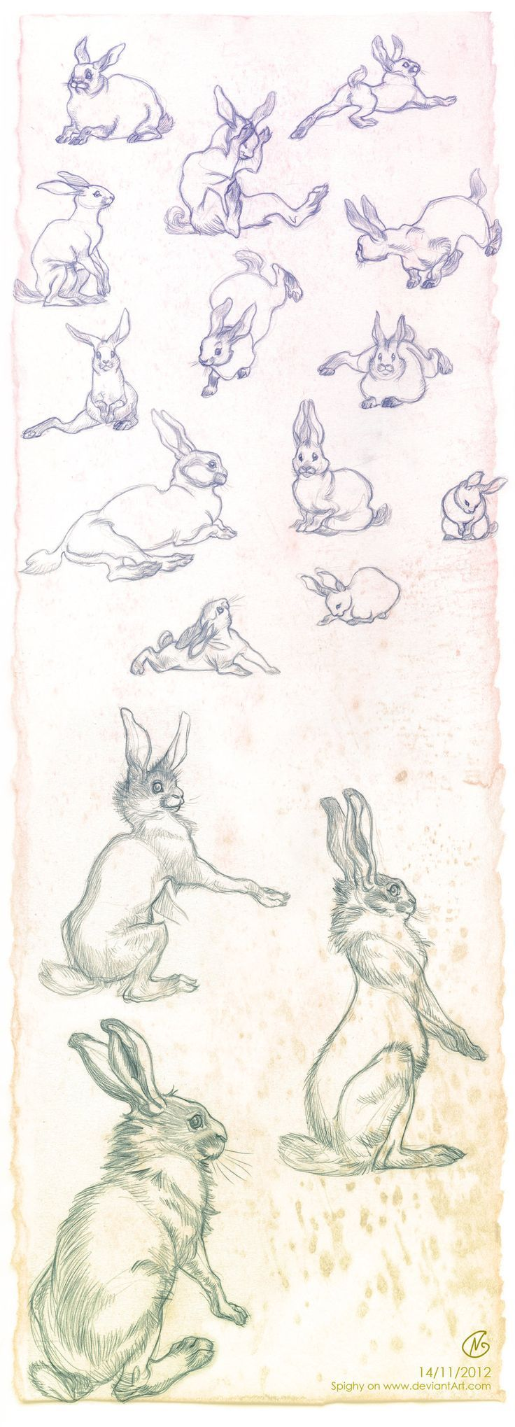 Кролик рисунок и картинки (9)