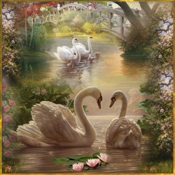 Лебеди красивые картинки и фото (2)