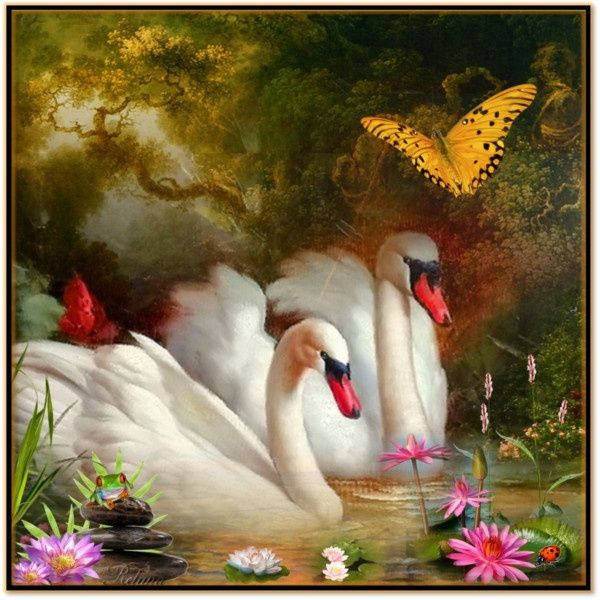 Лебеди красивые картинки и фото (25)