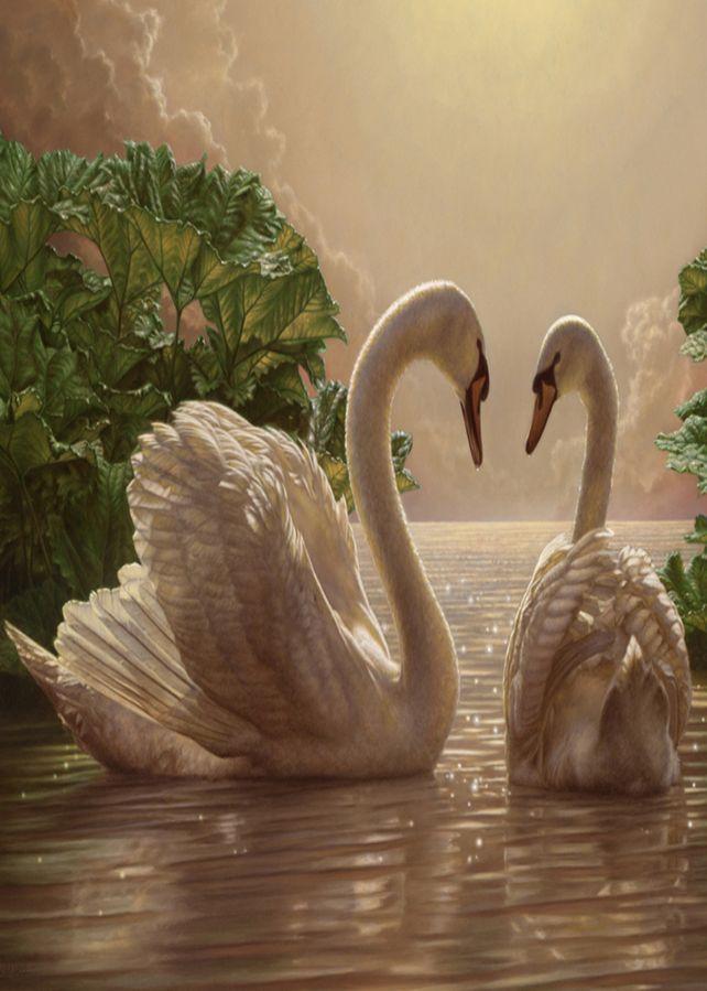 Лебеди красивые картинки и фото (4)