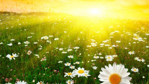 Лето красивые картинки и фото (5)