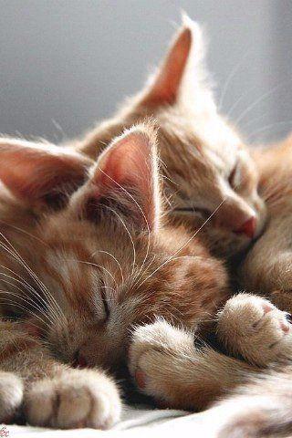 Милые кошки пушистые - 20 фото (1)