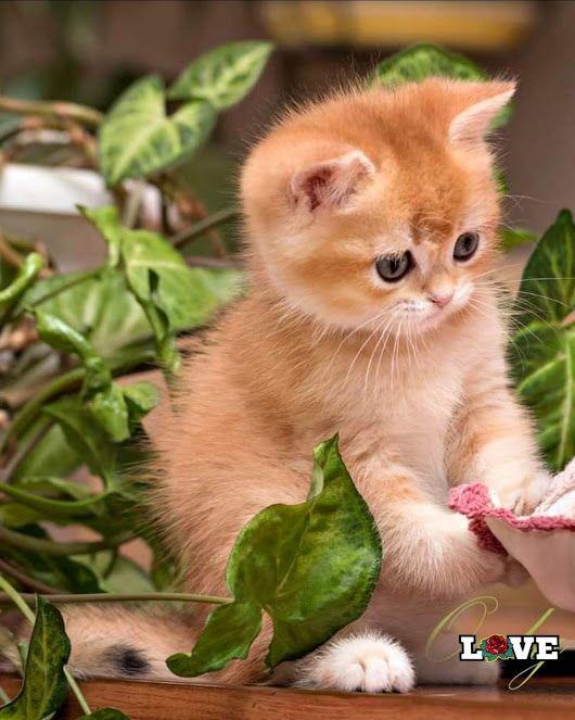 Милые кошки пушистые - 20 фото (10)