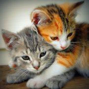 Милые кошки пушистые   20 фото (11)