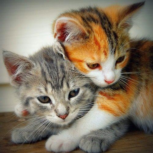 Милые кошки пушистые - 20 фото (11)