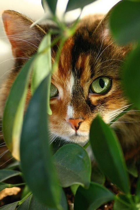 Милые кошки пушистые - 20 фото (13)
