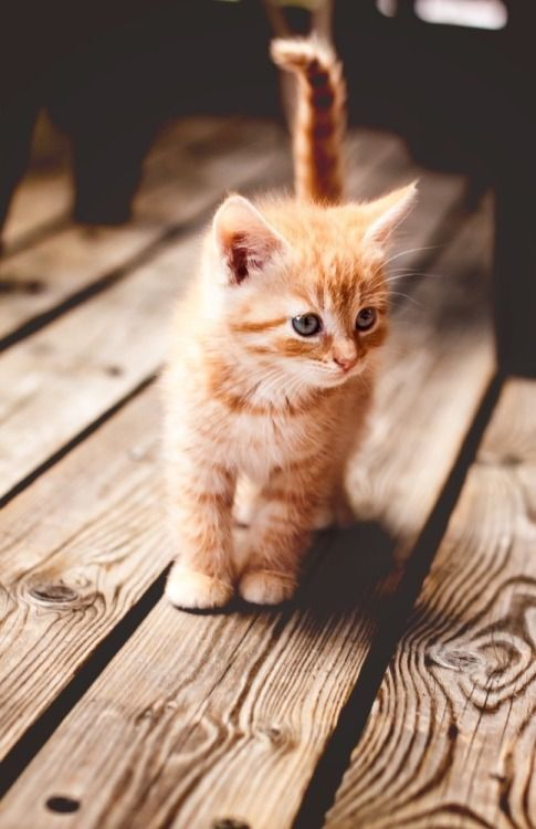 Милые кошки пушистые - 20 фото (15)