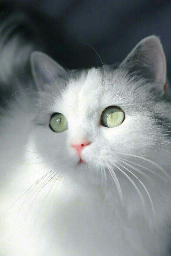 Милые кошки пушистые - 20 фото (17)