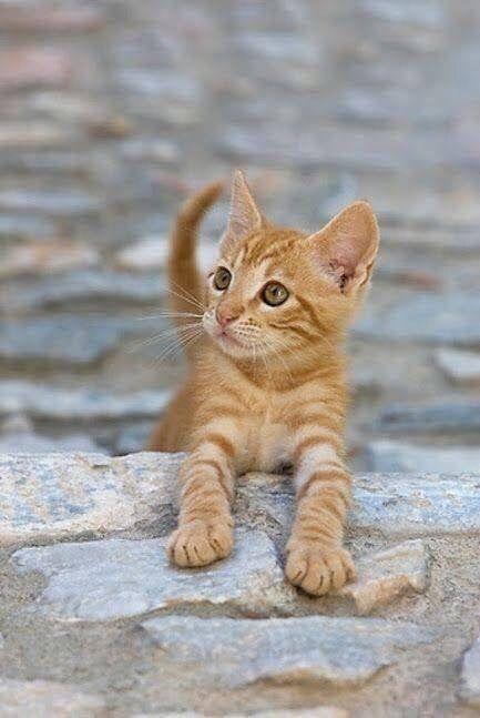 Милые кошки пушистые - 20 фото (19)