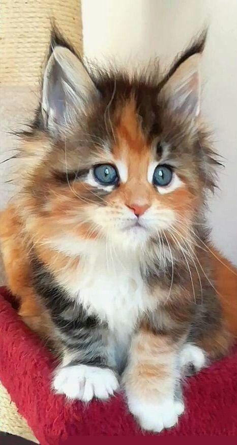 Милые кошки пушистые - 20 фото (3)