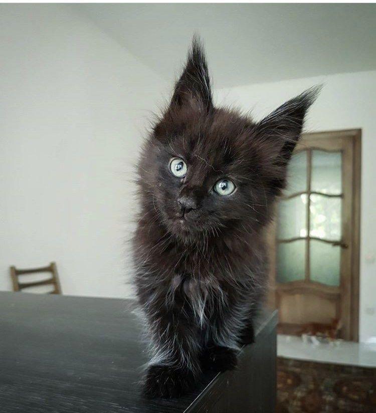 Милые кошки пушистые - 20 фото (6)
