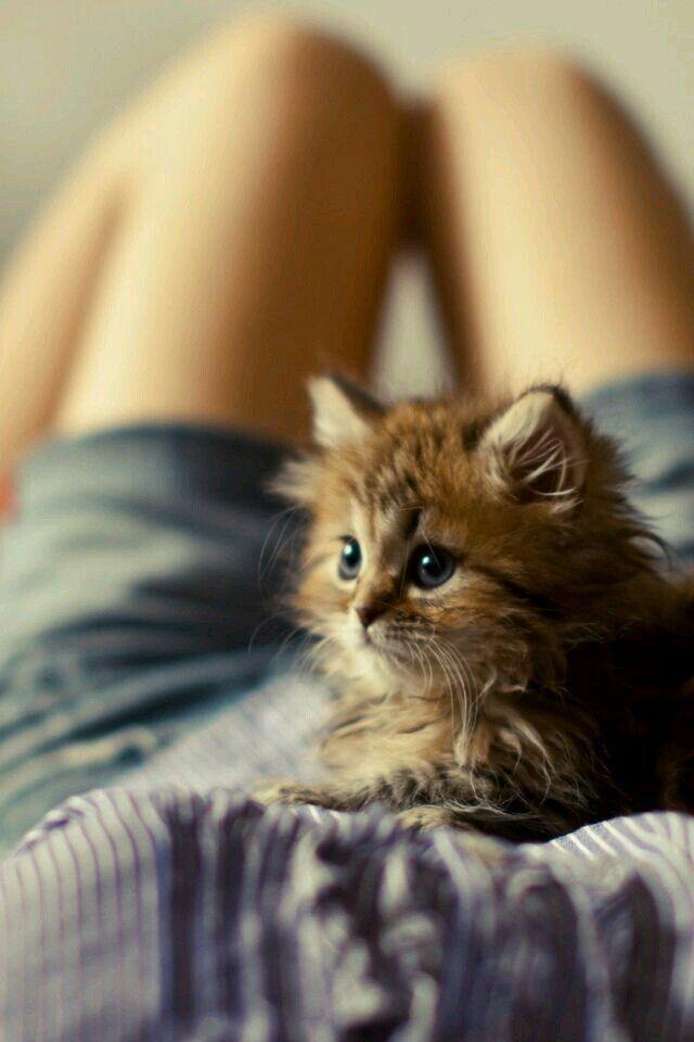 Милые кошки пушистые - 20 фото (8)