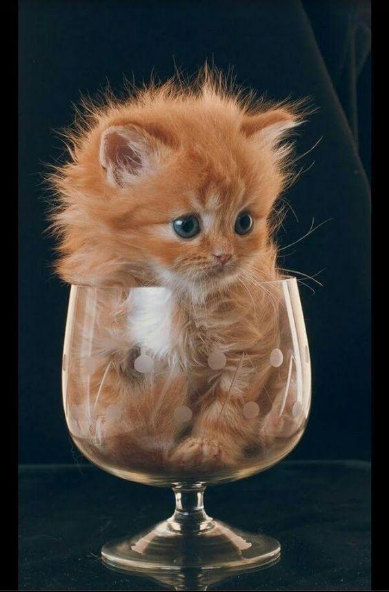 Милые кошки пушистые - 20 фото (9)
