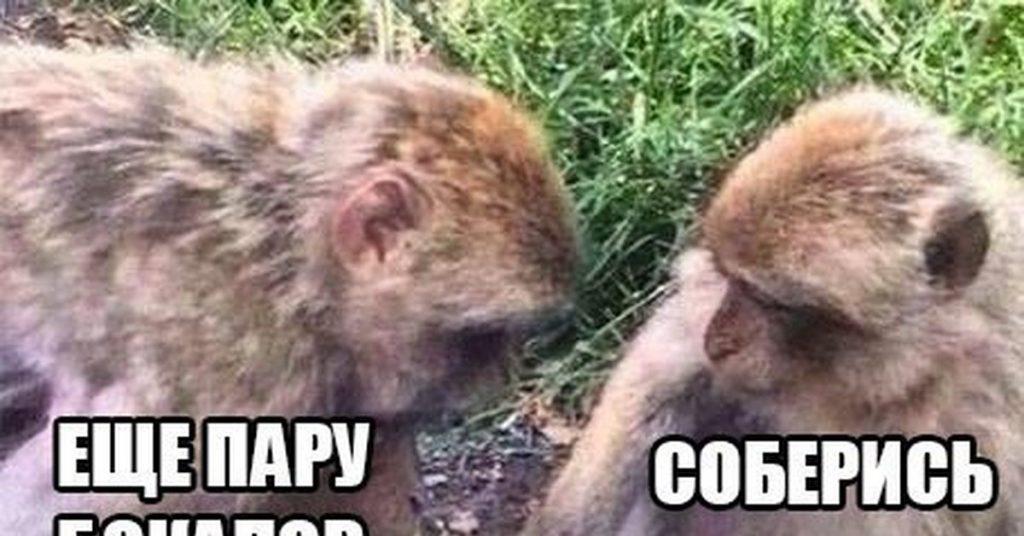 Картинки, картинка с обезьянами дайте мне спокойно умереть на новый год